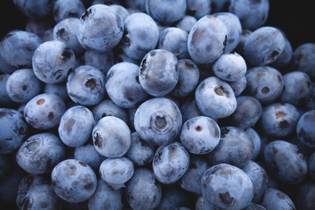 Free Image of Blueberries